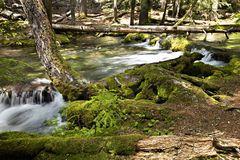 Clearwater river Stock Photography