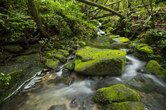 Clearwater stream in Tropical forest Royalty Free Stock Photos