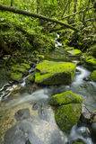 Clearwater stream in Tropical forest Stock Photography