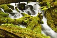 clearwaterfalls royaltyfri foto