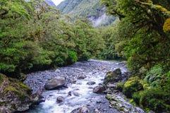 Cleddau River - Fiorland National Park