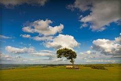 cleeve cotswolds英国小山星期日结构树 库存照片