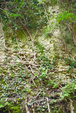 Cleft in the rock and tree roots. Stock Image