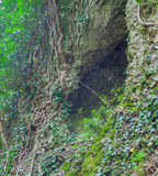 Cleft in the rock and tree roots. Royalty Free Stock Photography