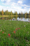 Clegg Lake with wildflowers. Royalty Free Stock Image
