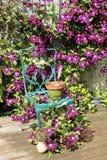 Clemátide y silla en el arreglo floral en decking Foto de archivo