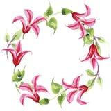 Clematide rossa Fiore botanico floreale Struttura selvaggia del wildflower della foglia della molla Fotografia Stock Libera da Diritti