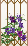 Clematis Photo stock