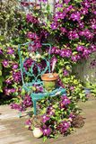 Clematis and chair in floral arrangement on decking Stock Photo