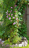 Clematis and Evy are growing in the Garden around a Tree. Royalty Free Stock Image