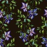 Clematis flower pattern Stock Photos