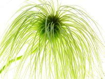 Clematis seed Royalty Free Stock Photos