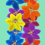 Clematis Textura inconsútil del modelo de flores Fondo floral Fotos de archivo