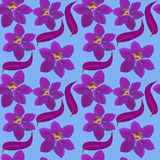 Clematis Texture sans couture de modèle des fleurs Fond floral Photographie stock