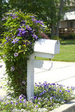 Clematis vine on a mailbox post Royalty Free Stock Photos