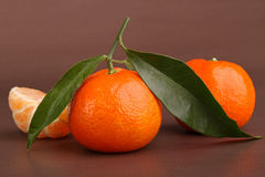 Clementina Imagem de Stock Royalty Free