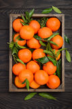 Clementina fresca da tangerina com as folhas na bandeja de madeira no fundo de madeira escuro imagem de stock