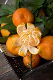 Clementina frescas inteiras e uma descascada Fotos de Stock Royalty Free