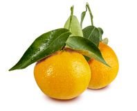 Clementinas, Clemenvillas, Satsuma, Octubrina стоковое изображение rf