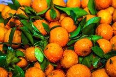 Clementinas de la hoja Foto de archivo