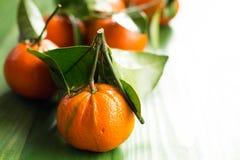 Clementinas escogidas frescas de la mandarina en la tabla verde de madera Imagen de archivo