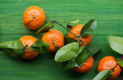 Clementinas escogidas frescas de la mandarina en la tabla verde de madera fotos de archivo libres de regalías