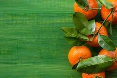 Clementinas escogidas frescas de la mandarina en la tabla verde de madera Fotografía de archivo libre de regalías
