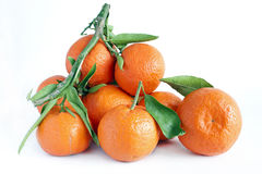 Clementine royalty free stock images