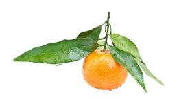 clementine Obrazy Stock