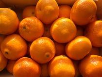 clementine Fotografia Stock