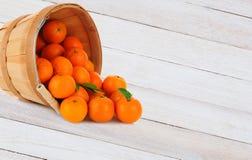 Clementine Basket Spill Fotografía de archivo libre de regalías