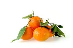 Clementine Fruit med sidor Royaltyfri Fotografi