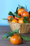Clementine mandarin Royalty Free Stock Images