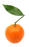 Clementine mandarin orange perfect Royalty Free Stock Photos