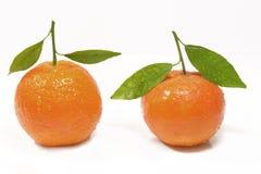 Clementine met groen blad Stock Foto