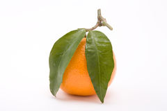 Clementine Orange Stock Images