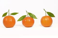 Clementine orange. Fresh clementine oragen with green leaves Royalty Free Stock Photo