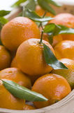 Clementine Oranges Stock Photography