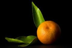Clementine på svart bakgrund royaltyfri fotografi