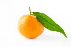 Clementine på vit bakgrund arkivfoton