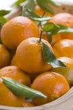 clementine pomarańcze fotografia stock