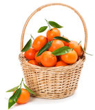 Clementine or Tangerine in basket. Stock Image
