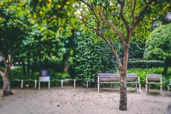 Clementine tree in Barcelona royalty free stock photography