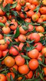 clementines Royaltyfri Foto