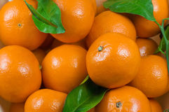Clementines Royalty Free Stock Photos
