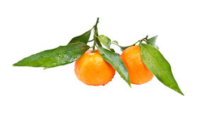 clementines Стоковая Фотография RF