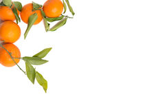 Clementines as a frame at white background Royalty Free Stock Images