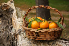 Clementines in basket Stock Photos