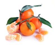 Clementines med segment Royaltyfri Bild