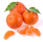 Clementines med segment Royaltyfria Bilder